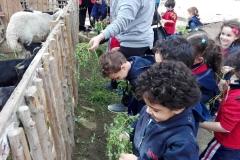 Fagnoon Farm Nursery Blue (2018-2019)